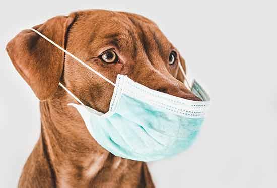 מה אפשר לעשות כדי להקל על הכלב ואולי למנוע את חרדת הנטישה?