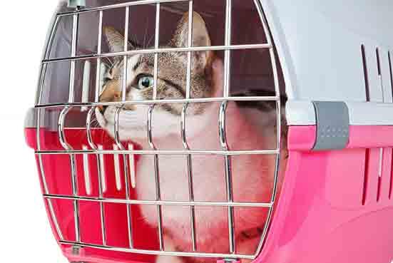 לא בקרטון! חשוב להובילת אהת החתול בכלוב תקין