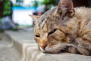 דואגים לחתול המבוגר שלנו